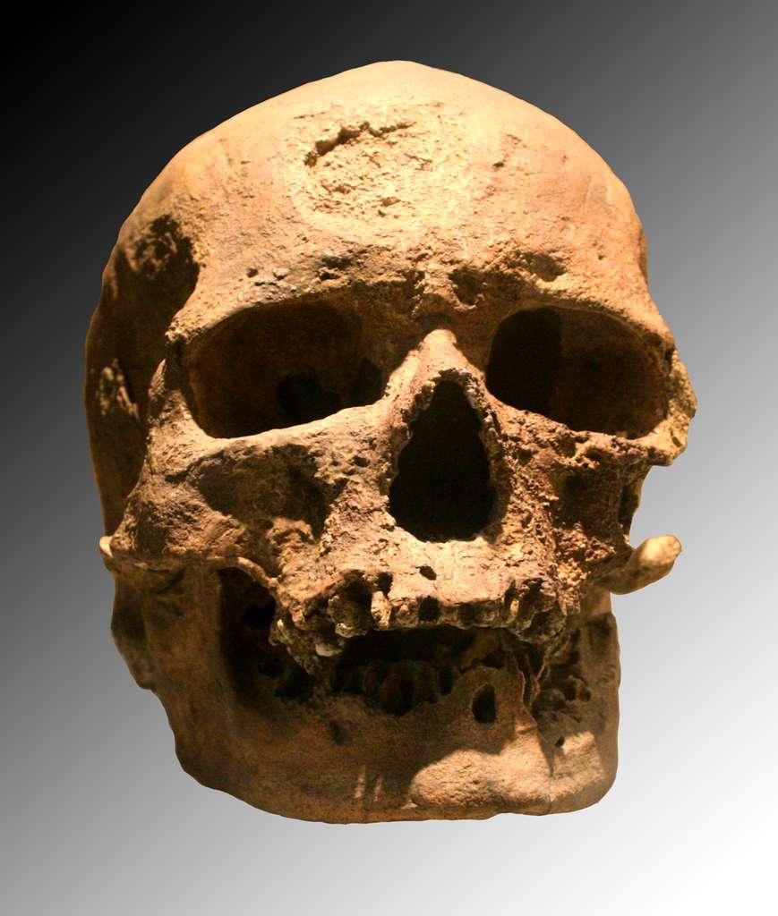 Crâne d'un homme de Cro-Magnon, un des représentants de l'espèce Homo sapiens. © Wikimedia Commons, cc by sa 3.0