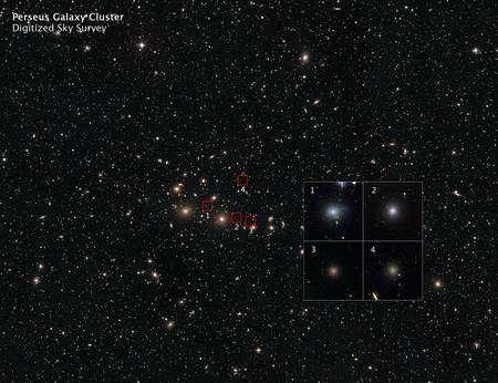Cliquer pour agrandir. Un premier zoom sur l'amas de Persée permet d'identifier des galaxies elliptiques naines quasie sphériques. Crédit : Nasa, Esa, D. De Martin (ESA/Hubble), C. Conselice (université de Nottingham)