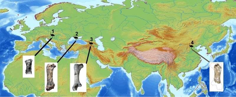 Distribution géographique de l'autruche géante Pachystruthio dans le Quaternaire ancien d'Eurasie. 1 : Hongrie (phalange), 2 : Crimée (fémur), 3 : Géorgie (fémur), 4 : Chine (fémur). © Eric Buffetaut et Delphine Angst