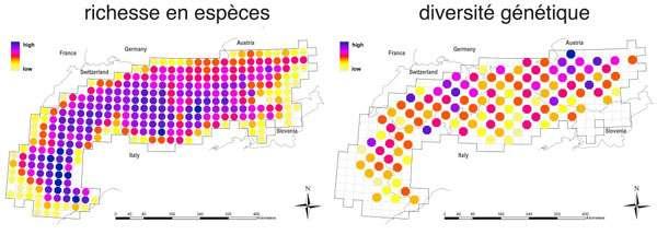 Comparaison de la richesse en espèces et de la diversité génétique sur l'ensemble du massif alpin. Ces paramètres sont élevés en violet et faibles en jaune. © Pierre Taberlet, Laboratoire d'écologie alpine (CNRS/Université Joseph Fourier Grenoble/Université de Savoie)
