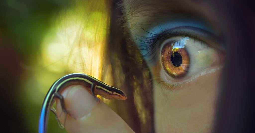 Ces premiers résultats publiés par des biologistes de l'université McGill (Canada) sur l'impact de l'être humain sur la diversité génétique des animaux devraient encourager d'autres équipes à étudier la question pour compléter ces conclusions. © TemperateSage, Pixabay License