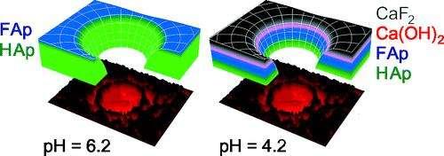 Les couches d'émail fluorées (noir et bleu) sont plus épaisses à pH acide. FAp : fluorapatite ; HAp : hydroxyapatite. © Langmuir