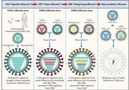 Le réassortiment à l'origine des pandémies de grippe. © DR