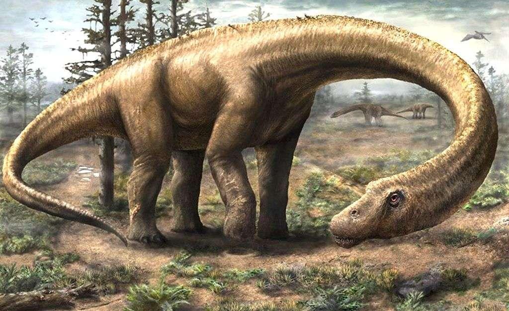 On ne possède pas encore d'exemplaire du crâne de Dreadnoughtus schrani, le titanosaure que l'on a retrouvé en Patagonie. Mais le grand nombre d'os que l'on connaît permet d'en faire cette reconstitution d'artiste, qui doit être assez fidèle. © Jennifer Hall