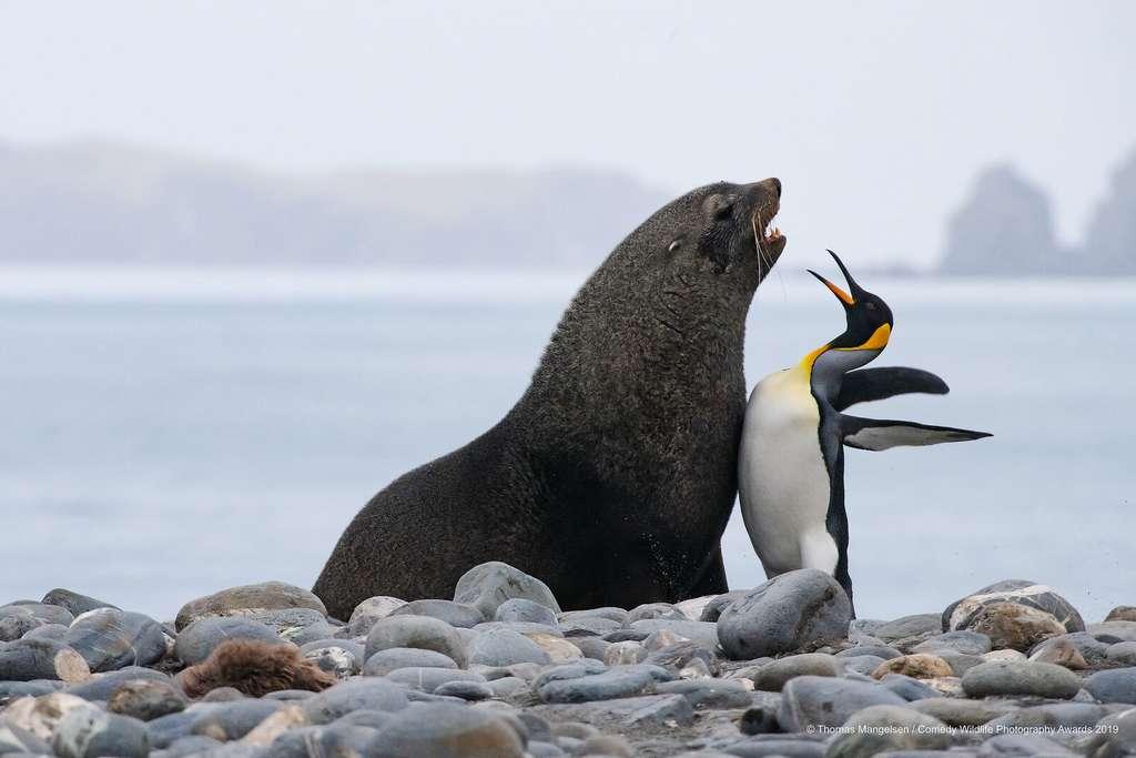 Deux amis de longue date qui se retrouvent. © Tom Mangelsen, Comedy Wildlife Photography Awards