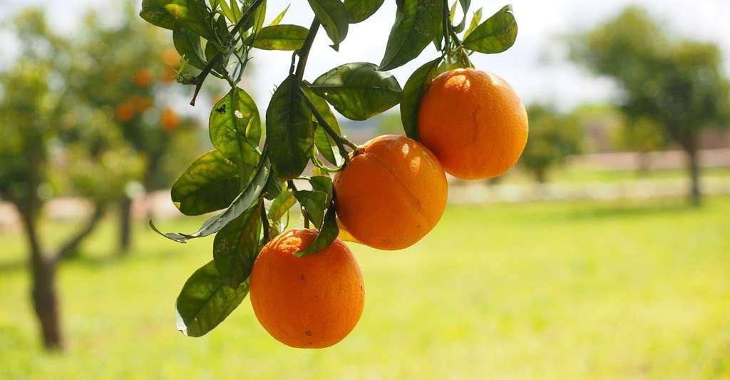 Comment choisir ses arbres fruitiers ? © Hans, Pixabay, DP