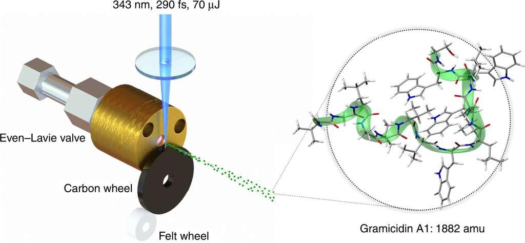 Pour leur expérience, les physiciens ont généré à l'aide d'un laser (en bleu) un faisceau moléculaire de gramicidine. © Armin Shayeghi, University of Vienna