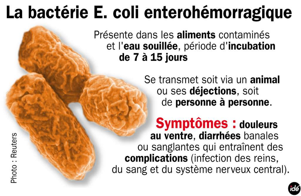 Les bactéries E. coli entérohémorragiques ont déjà provoqué au moins trois morts en Allemagne. © Idé