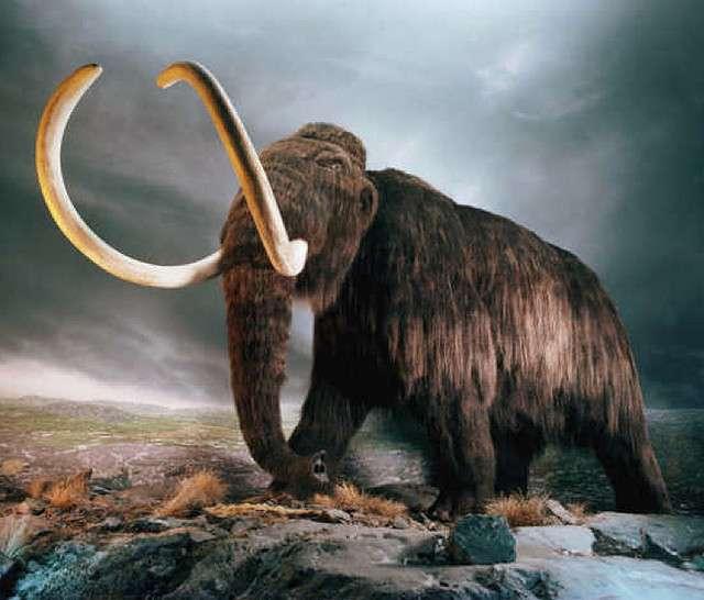 Le mammouth laineux (Mammuthus primigenius) aurait disparu il y a plus de 10.000 ans mais certains veulent croire que son espèce pourrait être ressuscitée. © Hawkoffire, Flickr, cc by 2.0