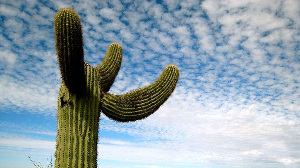 Le parc national de Saguaro et ses célèbres cactus