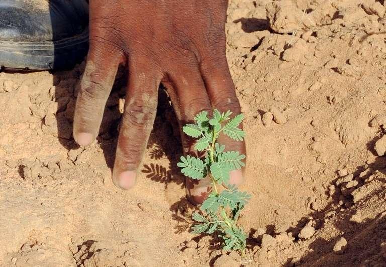 Un garde forestier sénégalais et un jeune arbre au Sénégal, le 3 octobre 2008. © Seyllou Diallo, AFP, Archives