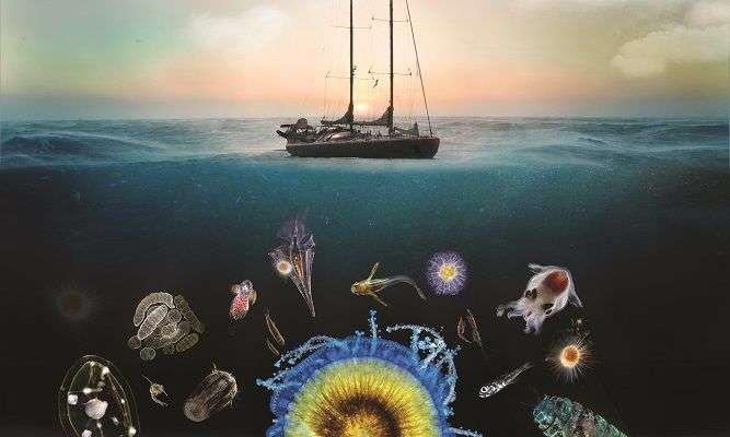 Entre 2009 et 2013, l'expédition Tara Océans a collecté 35.000 échantillons de plancton au cours d'un périple de 140.000 km. Ils constituent la plus grande base de données jamais rassemblée de manière quasi simultanée. © G. Bounaud, C. Sardet, Soixanteseize, Tara Expeditions