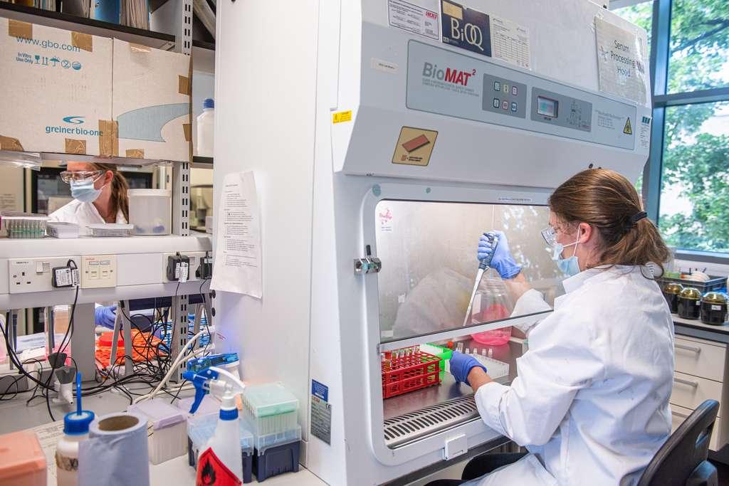 Le laboratoire d'Oxford travaillait depuis des années sur un vaccin contre une « maladie X » à partir duquel on pourrait développer un vaccin contre n'importe quelle maladie. © Université d'Oxford