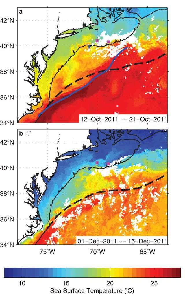 Maxima de température de surface de la mer représentés pour deux périodes : (a) entre le 12 et le 21 octobre 2011 et (b) entre le 1er et le 15 décembre. Sur la figure (a), la ligne tiretée définit la trajectoire moyenne du Gulf Stream durant cette période, la ligne bleue indique la trajectoire observée en septembre 2011. La figure montre que le centre du courant, à 39° N : 68° W a dévié vers le nord. Sur la figure (b), la ligne tiretée suit la trajectoire moyenne du Gulf Stream durant cette période. La ligne en trait plein présente en (a) et (b) la limite du plateau continental. On observe de larges méandres sur la figure (b). © Glen Gawarkiewicz et al., Scientific Reports