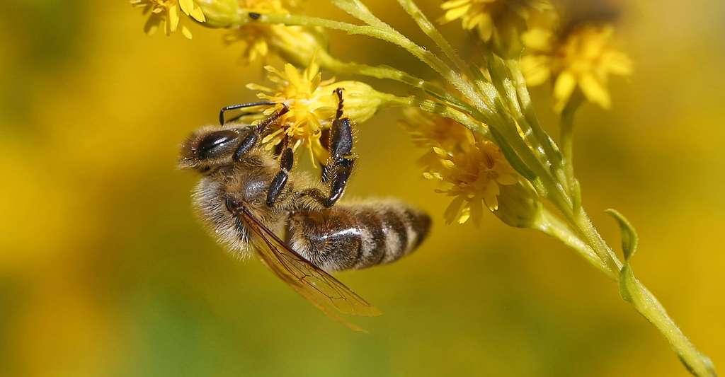 Protégeons les abeilles. © VhsPfaffenhofen, CCO
