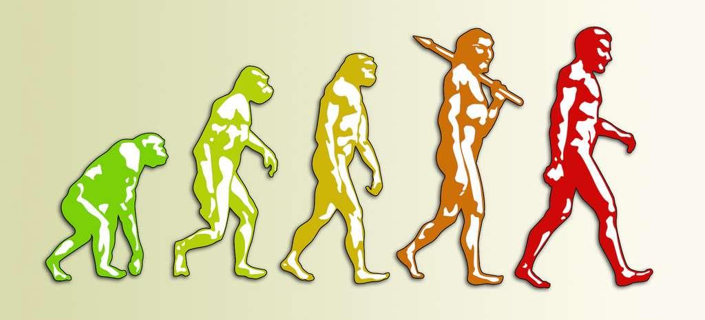 En l'espace de deux millions d'années, l'Homme a gagné 20 kilos et la taille de son cerveau a triplé. © Giordano Aita, Adobe Stock