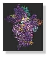 Structure d'une sous-unité du ribosome, assemblage complexe de protéines et d'acides nucléiques. L'organisation de cette extraordinaire micro-machine, constituée de dizaines de milliers d'atomes, n'aurait pu être élucidée sans le rayonnement synchrotron.ESRF— Ligne de cristallographie)