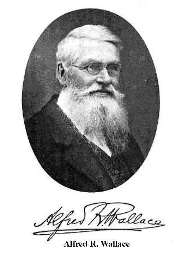 Portrait d'Alfred Wallace publié en introduction de son livre, Darwinism, cité plus haut dans le texte. Il voyait dans les rayures des zèbres une action de la sélection en conformité avec la théorie de Charles Darwin. © DR