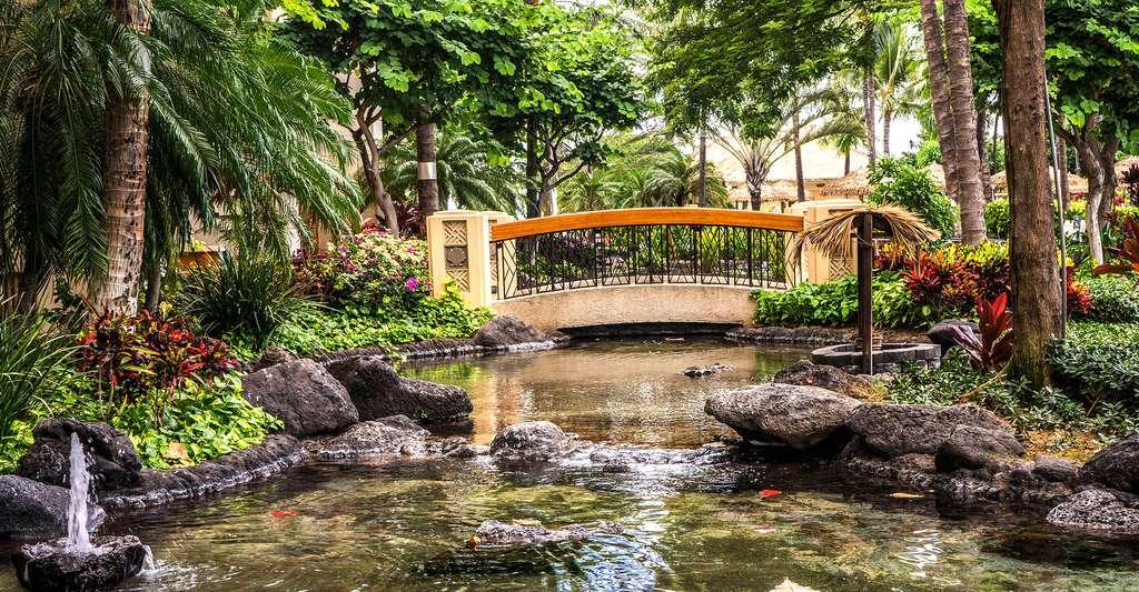 Tendance japonaise pour ce bassin de jardin © Mariamichelle - Domaine public