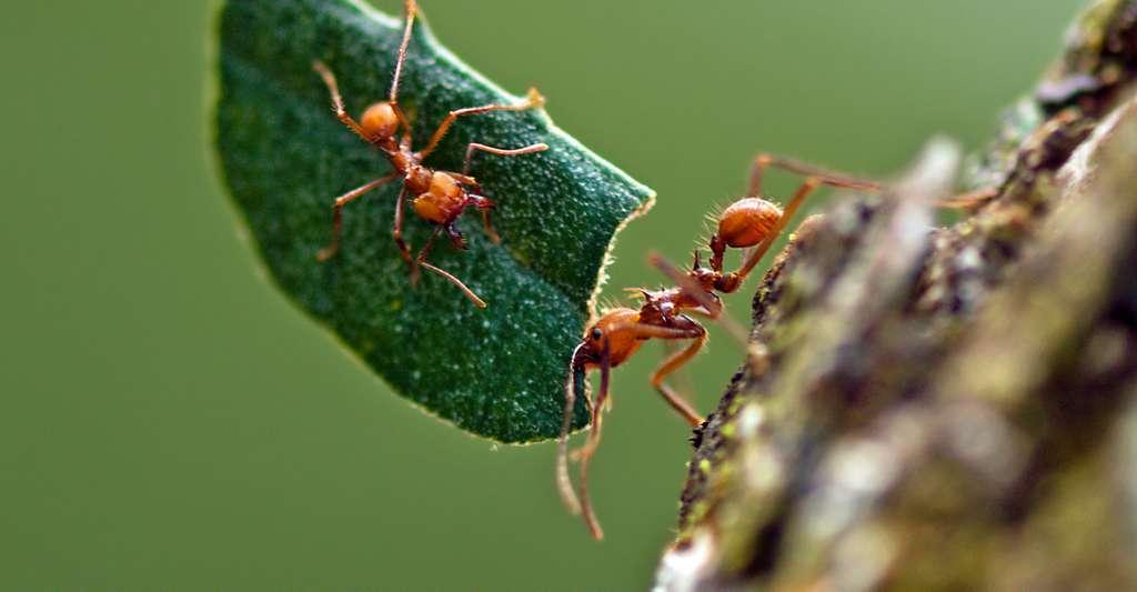 Les fourmis champignonnistes. © Kathy & sam - CC BY 2.0