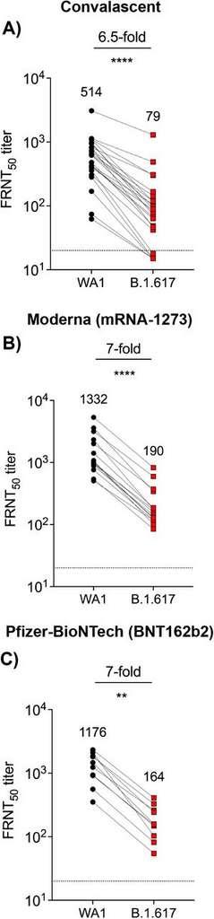 La réponse des anticorps neutralisants face au variant indien B.1.617 et un autre variant en circulation aux États-Unis. Les anticorps sont environ 7 fois moins efficaces dans le cas du variant indien. © Venkata-Viswanadh Edara et al. biorXiv