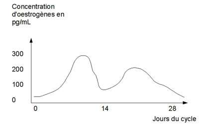 Evolution du taux d'œstrogènes dans le sang au cours du cycle de la femme. Chez certaines patientes, une corrélation semble exister entre les crises migraineuses et les phases du cycle. Source : MC Jacquier, schéma personnel.