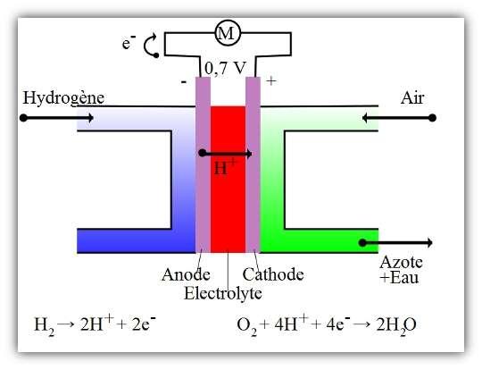 Fonctionnement d'une pile à combustible. L'hydrogène est oxydé au contact de l'anode, ce qui libère un électron. L'ion hydrogène résultant est ensuite récupéré au niveau de la cathode, avec l'électron. Le dioxygène est alors réduit, ce qui forme de l'eau. © HandigeHarry, Wikipédia, domaine public