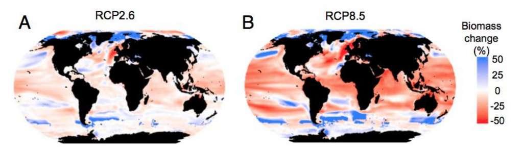 Les pourcentages d'évolution de la biomasse d'animaux marins par rapport à la fin du XXe siècle selon les régions du globe et selon deux scénarios d'émission de CO2 : forte atténuation des émissions pour RCP2.6 et poursuite sur un rythme actuel pour RCP8.5. © Heike K. Lotze et al., Dalhousie University