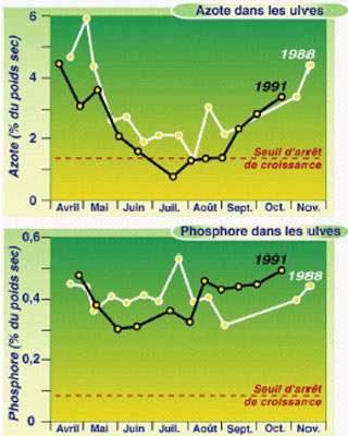 Figure 5. Evolution saisonnière en Baie de Saint-Brieuc des teneurs en azote et en phosphore du tissu des ulves de la marée verte (en tiretés: la teneur en-dessous de laquelle l'arrêt de la croissance a été expérimentalement observé ; d'après Dion et al., 1996)