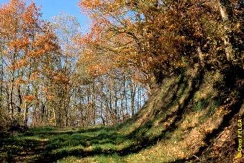 Vue de la forêt de la Grésigne