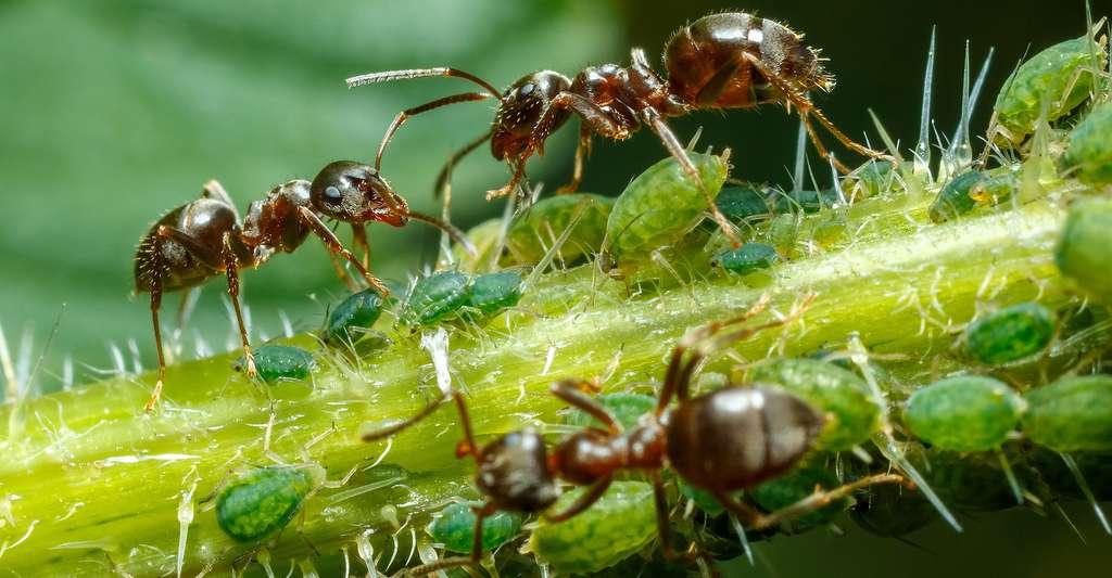 Peut-on parler de culture chez les fourmis ? © Szasz-Fabian Jozsef, Shutterstock