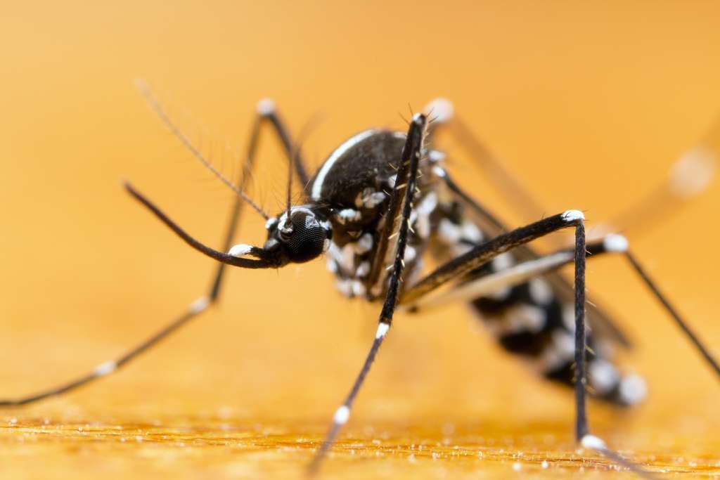 Les moustiques pondent leurs œufs dans de l'eau stagnante. © Gordzam, Adobe Stock