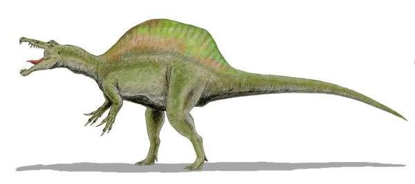 Spinosaurus aegyptiacus, Crétacé moyen, Égypte. © Dinoguy2, Creative Commons Attribution 2.5 Generic license
