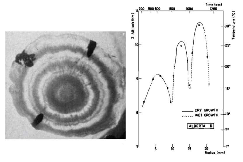 Figure 2 : photographie d'une tranche d'un grêlon tombé dans la province d'Alberta (Canada) le 7 août 1971, montrant l'alternance de couches foncées (croissance sèche) et de couches claires (croissance humide). L'analyse en deutérium permet de reconstituer l'évolution en altitude de ce grêlon, qui s'est formé dans trois ascendances successives (source : Jean Jouzel, Étienne Roth et Liliane Merlivat, « Isotopic study of hail », Journal of Geophysical Research, vol. 80, n° 36, 20 décembre 1975). © Jean Jouzel, tous droits réservés