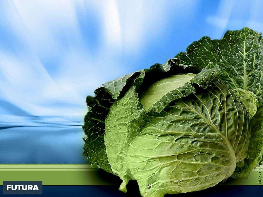 Choux vert source de vitamines