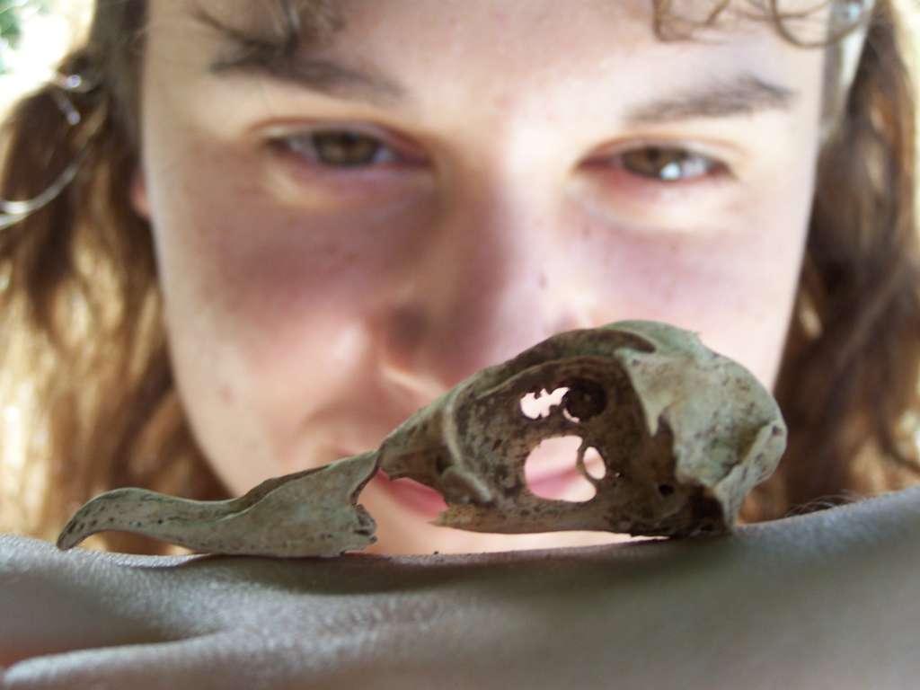 Anne Wiley, principal auteur de l'étude, jette un coup d'œil au crâne d'un pétrel des Hawaï. © Anne Wiley