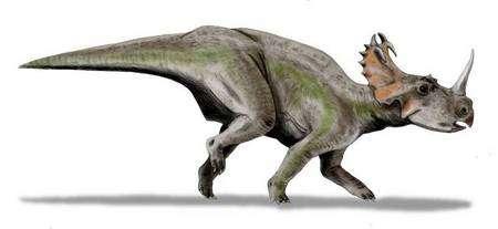 Reconstitution de Centrosaurus. Source Commons