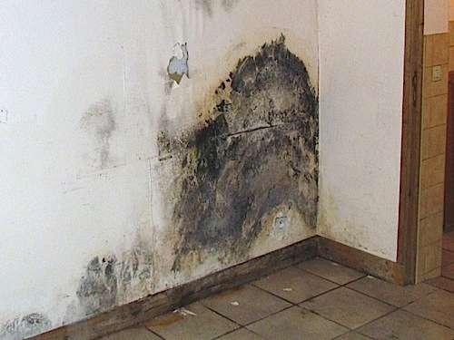 L'humidité ascensionnelle se signale par des traces caractéristiques. Ici, de la moisissure à la base des murs. © prix-immobilier.info