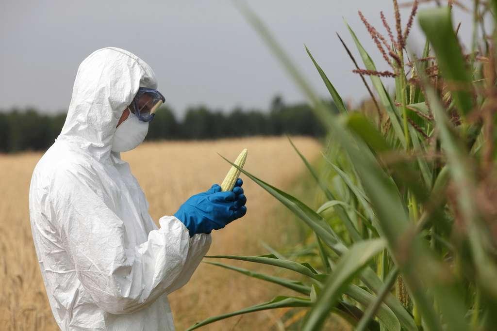 Quels sont les avantages et inconvénients des OGM ? © endostock, Fotolia
