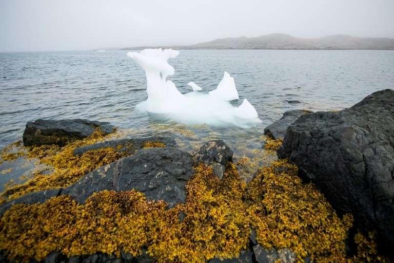 Un petit iceberg flotte à Kulusuk, au Groenland, le 14 août 2019. © Jonathan Nackstrand, AFP, Archives