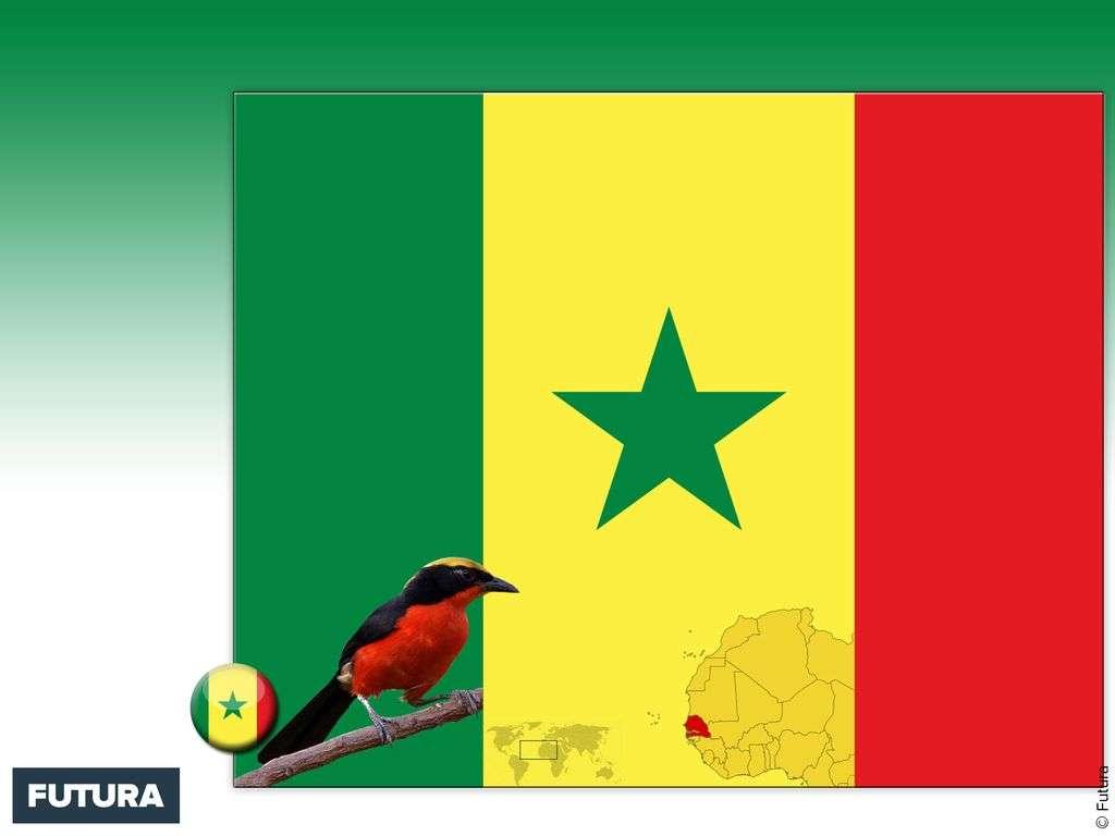 Drapeau : Sénégal