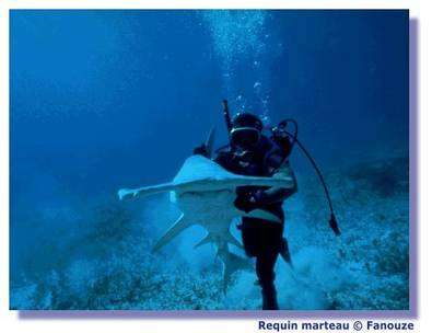 Photo prise en aquarium, à ne jamais faire bien entendu, en pleine mer. © Fanouze