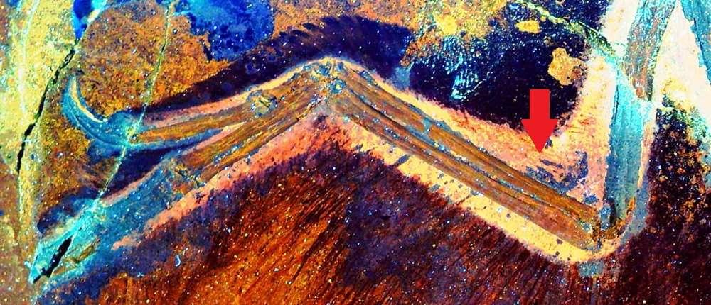 La fluorescence induite par laser donne une image détaillée d'une aile d'Anchiornis montrant des traces de tissus mous. Les chercheurs y voient un « propatagium » (indiqué par la flèche) qui correspondrait au patagium (un voile cutané et musculaire) des oiseaux actuels. © Wang XL, Pittman M. et al., 2017