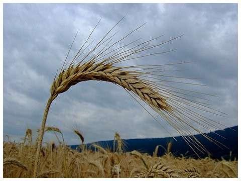 Biovigilance et biosécurité sont mises en avant par les réglementations internationales. © reneenicoux.fr