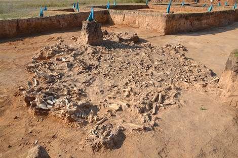 Site de fouille de Botai, dans le nord du Kazakhstan. © Alan Outram, University of Exeter