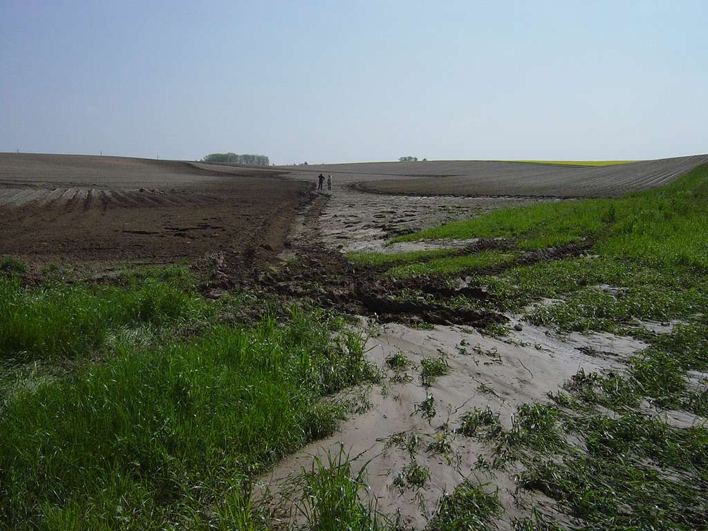 Traces de ruissellement boueux à l'aval d'un versant occupé par un champ de pommes de terre, dans la région limoneuse belge. © Evrard, 2008