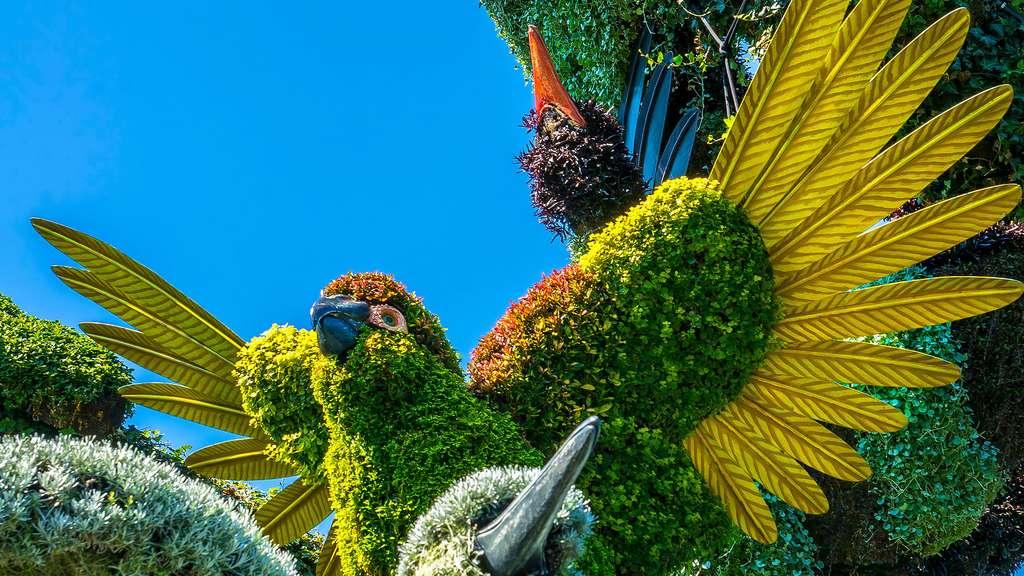 Le perroquet, une des mosaïcultures de l'arbre aux oiseaux
