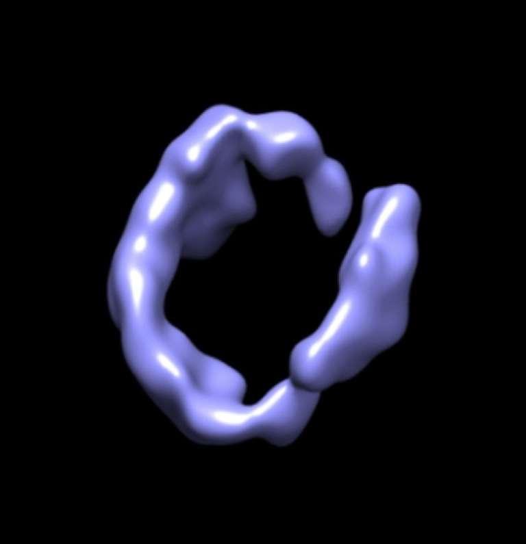Une image de synthèse de la structure de l'apolipoprotéine A1 obtenue avec la technique Ipet (Individual-particle electron tomography)© Lawrence Berkeley National Laboratory