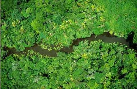 Contrairement à ce qu'avançaient certains scientifiques, l'apparition de la grande biodiversité qui caractérise l'Amazonie ne serait pas un phénomène récent
