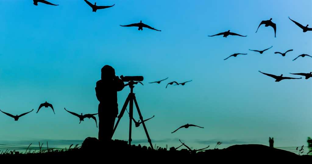Ornithologue collectant des données sur le terrain. © alvenmod, Adobe Stock